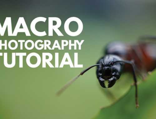 Macro Photography Tutorial: What is Macro Photography?
