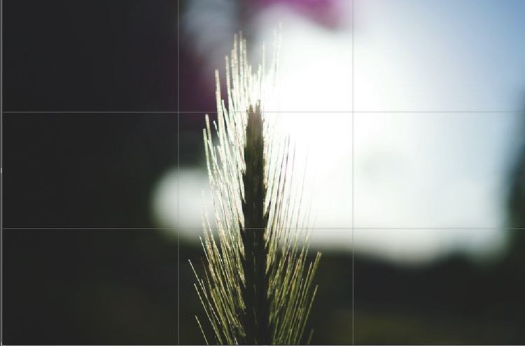 7. Rule of Thirds Centering